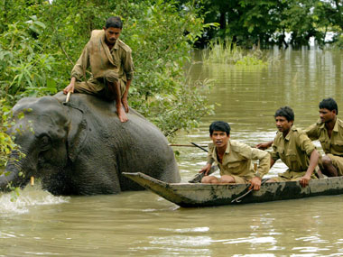 Mahouts try to direct an elephant away from flood waters in Kaziranga. Reuters.