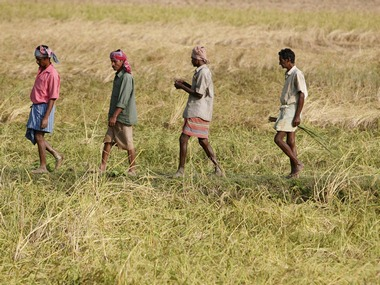 File photo of farmers walking through a paddy field in Nandigram village