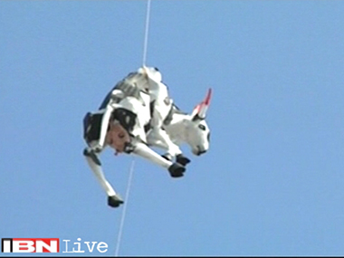 Divine Bovine takes flight. IBNLive