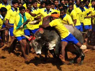 Jallikattu is a bull taming sport. AFP