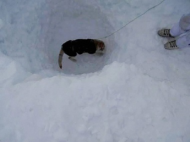 Specialised Army teams pulled out Lance Naik Hanamanthappa  Koppad's body from under 25-feet of snow.