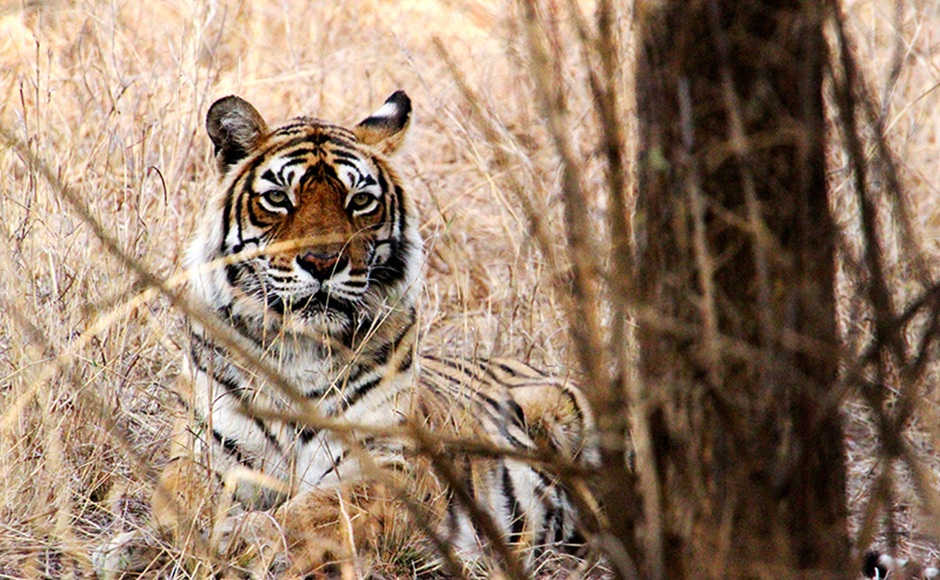 Machhli, photographed by thousands of tourists over the years at Ranthambore National Park, died on Thursday, days after she stopped eating.
