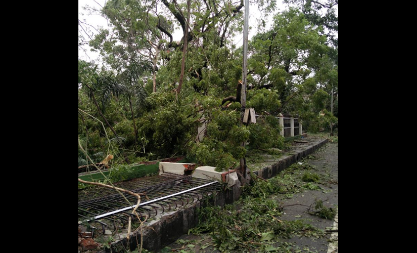 Panagal park in Chennai was brought to ruins as Cyclone Vardha crossed the coast