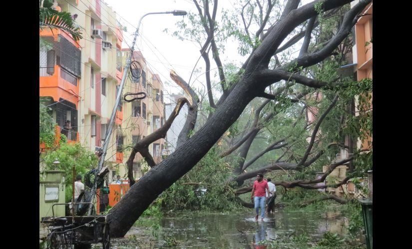 A locality in Chennai after Vardah made landfall. Firstpost/Jency Samuel