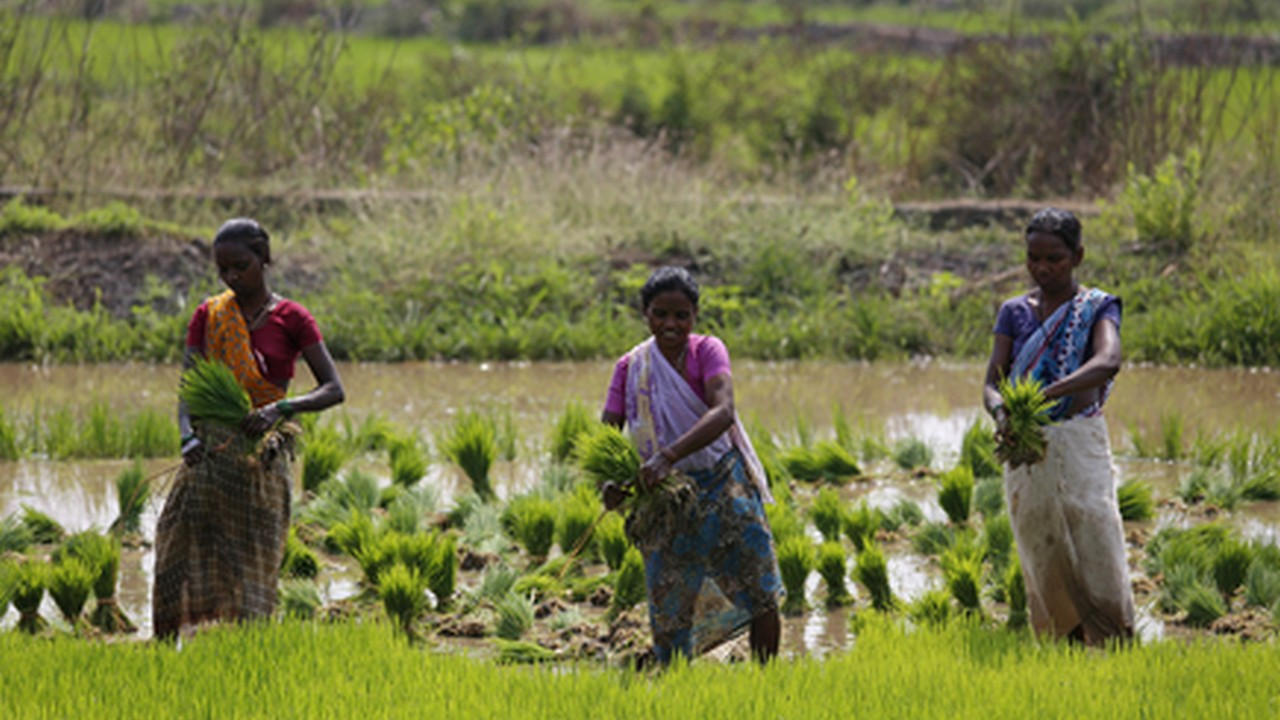 Youth can change the face of agriculture with technology