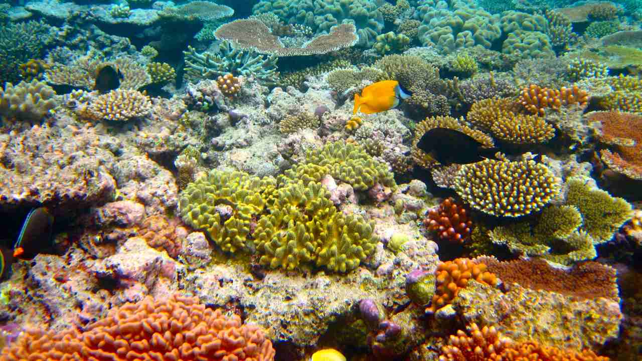 The authority has received 250 reports of sightings of bleached coral due to elevated ocean temperatures during an unusually hot February. Image credit: Kyle Taylor/Flickr