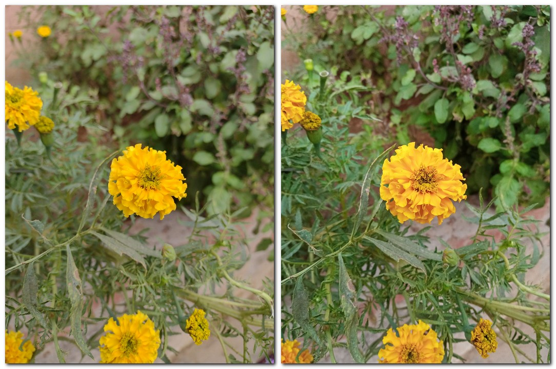 While Redmi 9 Prime captured good details, Motorola managed to capture better and more natural colours. (Left Moto E7 Plus-Right Redmi 9 Prime)